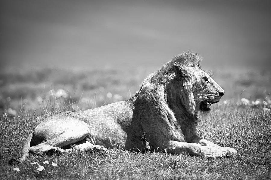 Africa Photograph - Pride In Black And White by Sebastian Musial