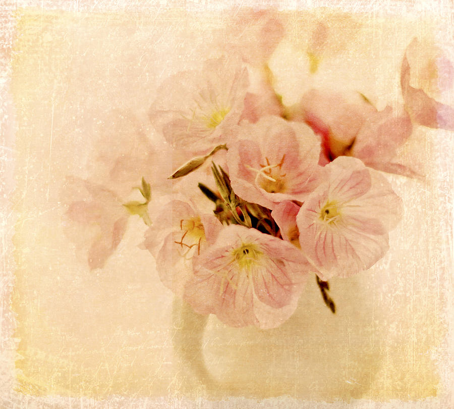 Primroses Photograph - Primrose Delights by Linde Townsend