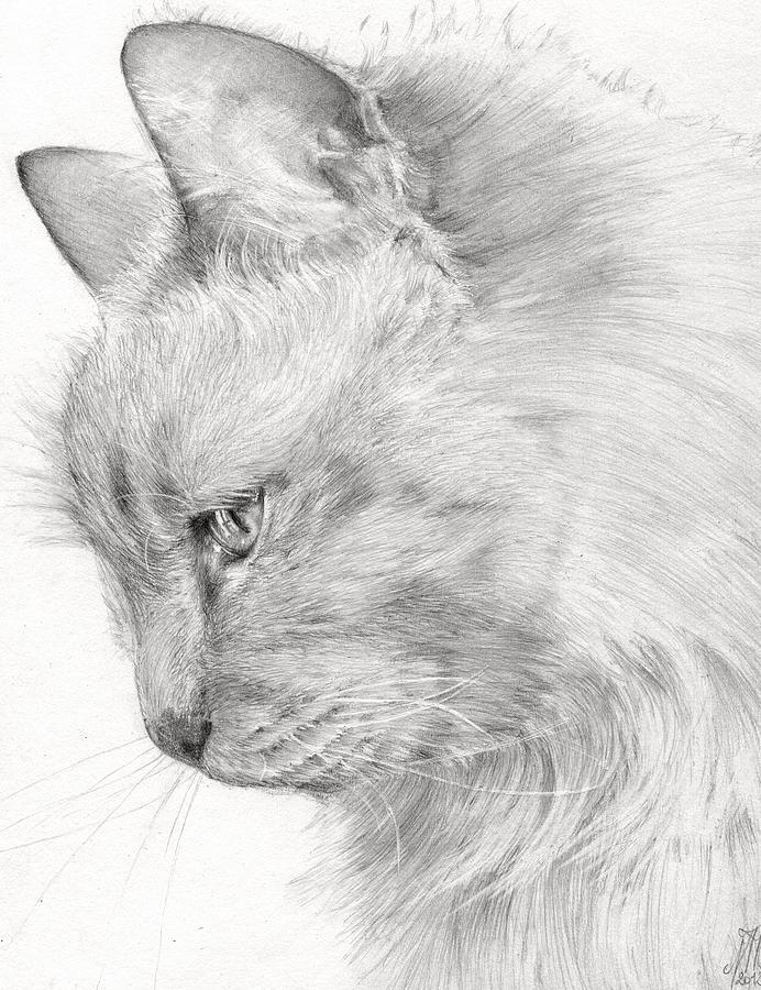 Cat Drawing - Princess Fleur by Monique Geurts