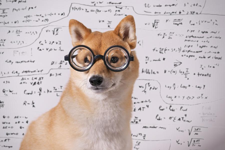 Horizontal Photograph - Professor Dog by Eric Jung
