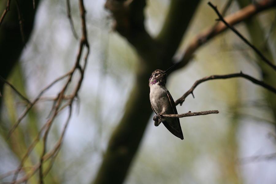 Bird Photograph - Profile Pose by Wendi Matson