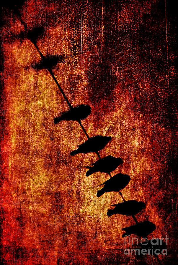 Birds Photograph - Prophets by Andrew Paranavitana