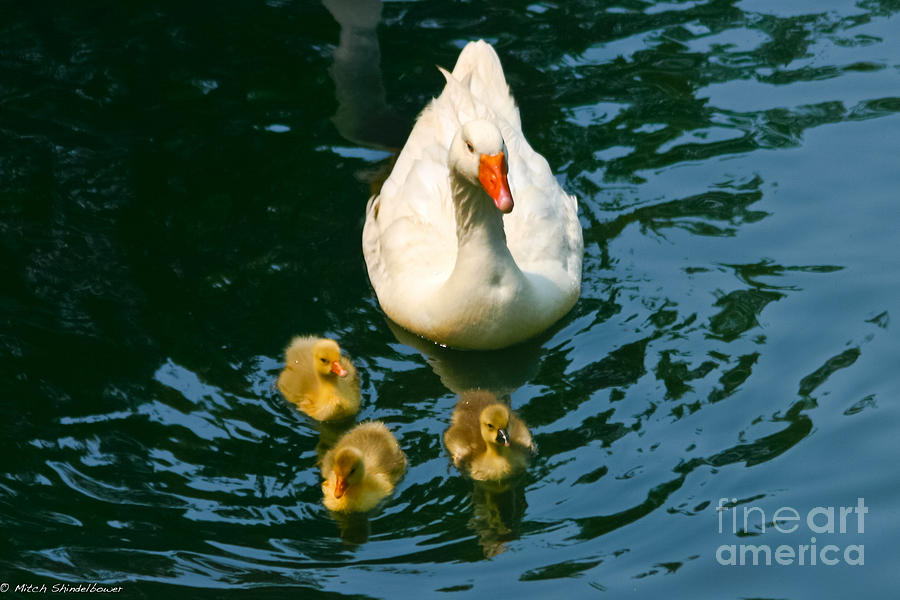 Proud Photograph - Proud Mother  by Mitch Shindelbower