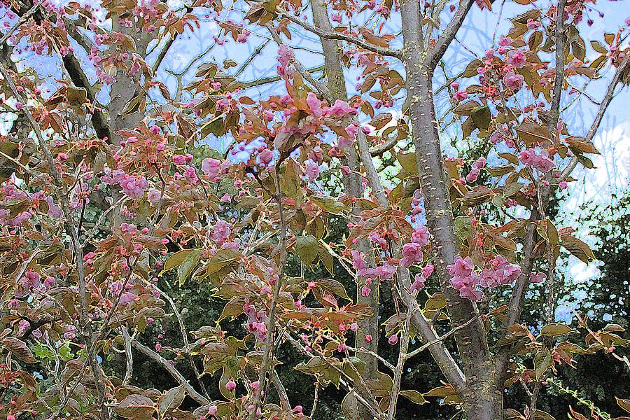 Flowering Cherry Digital Art - Prunus Kanzan 1 by Surbjit Singh