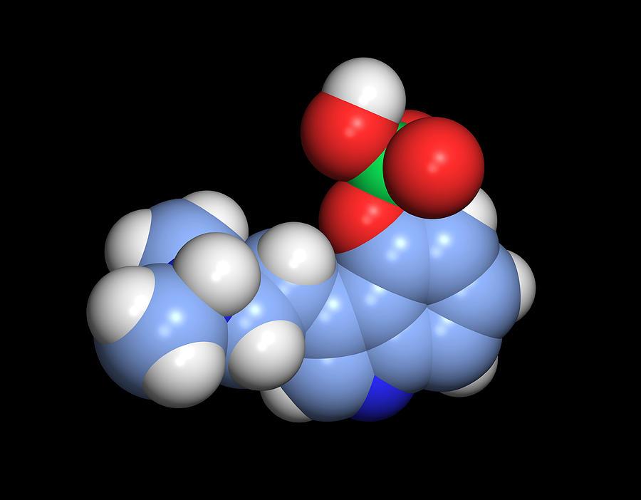 Psilocybin Photograph - Psilocybin Hallucinogen Molecule by Dr Tim Evans