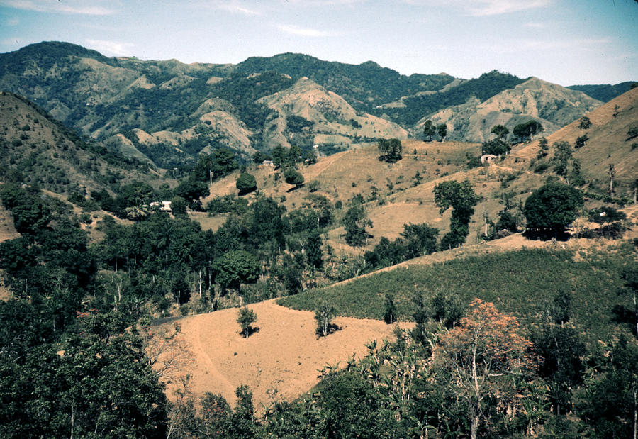 1930s Photograph - Puerto Rico. Forest And Clear Cut by Everett