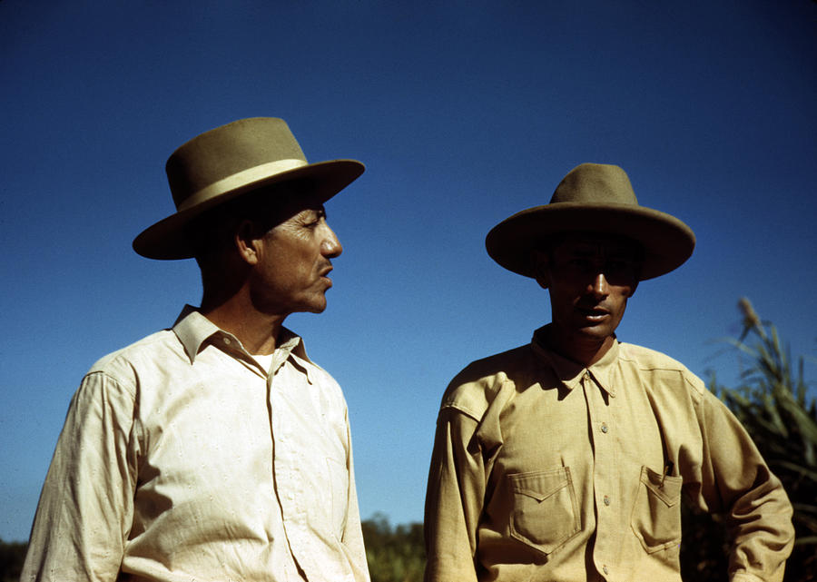 1930s Photograph - Puerto Rico. Sugar Cane Workers by Everett