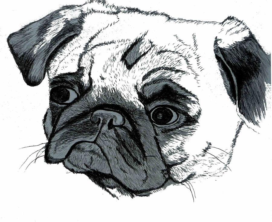 Pug Digital Art - Pugsly by Patricia Barmatz