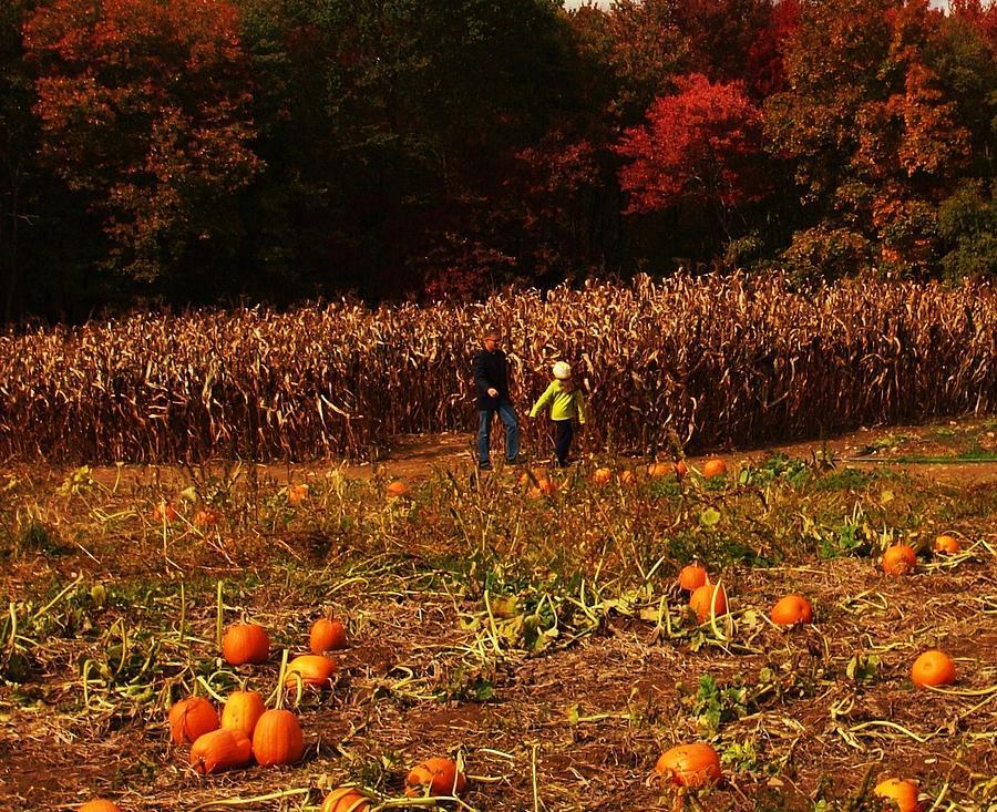 Pumpkin Photograph - Pumpkin Field by John Scates