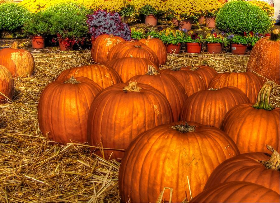pumpkin patch digital art by rachel katic