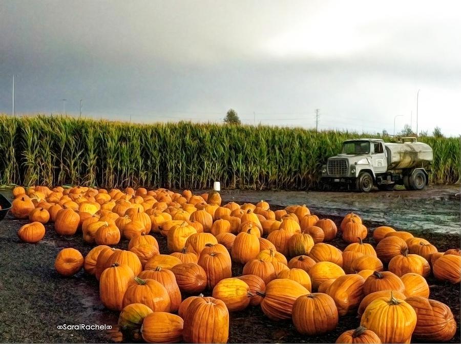 Seattle Photograph - Pumpkin Patch Round Up by Sarai Rachel