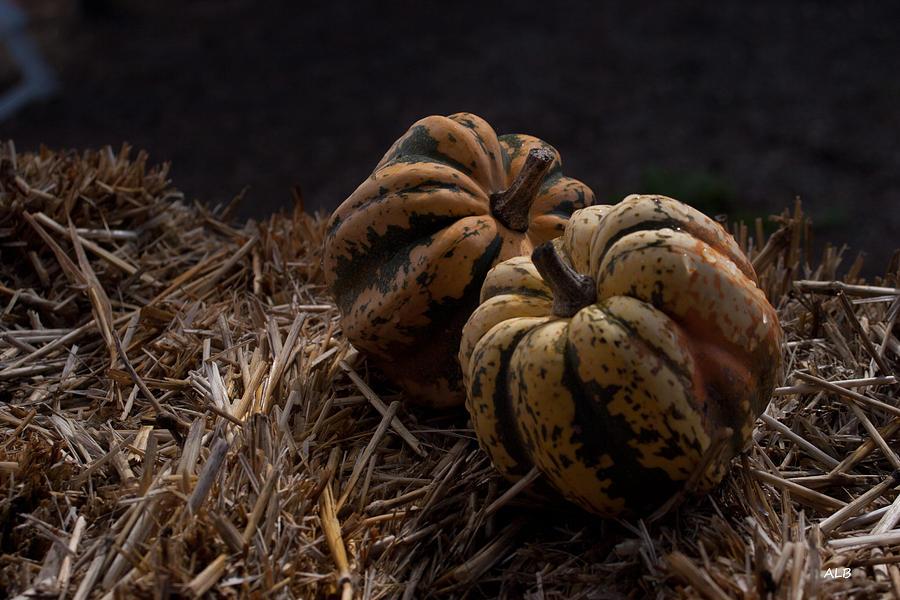 Pumpkins Photograph - Pumpkins by April Bielefeldt