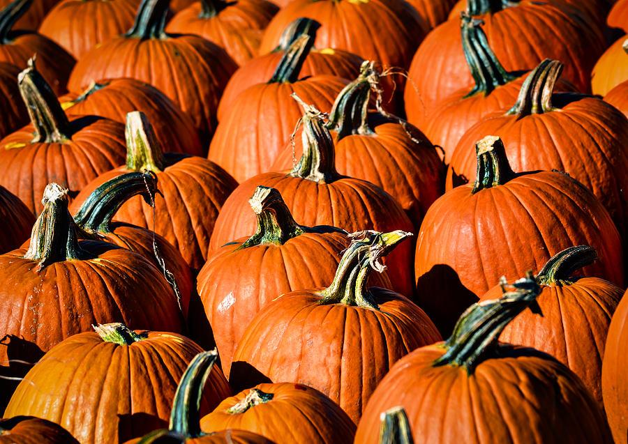 Agriculture Photograph - Pumpkins Galore by Julie Palencia