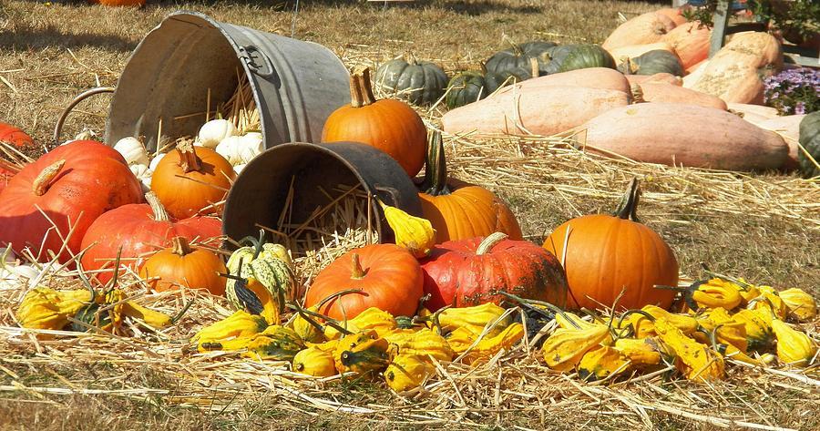 Pumpkins Photograph - Pumpkins by Laurie Kidd