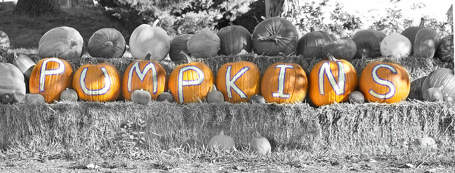 Pumpkins Photograph - Pumpkins P U M P K I N S Bwsc by James BO  Insogna