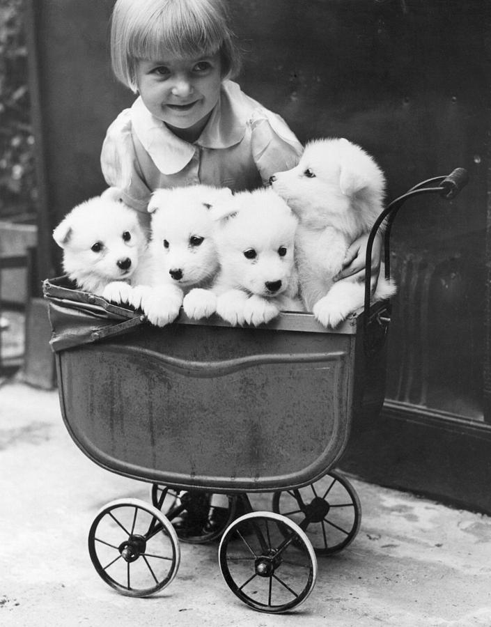 Child Photograph - Puppies In A Pram by Fox Photos