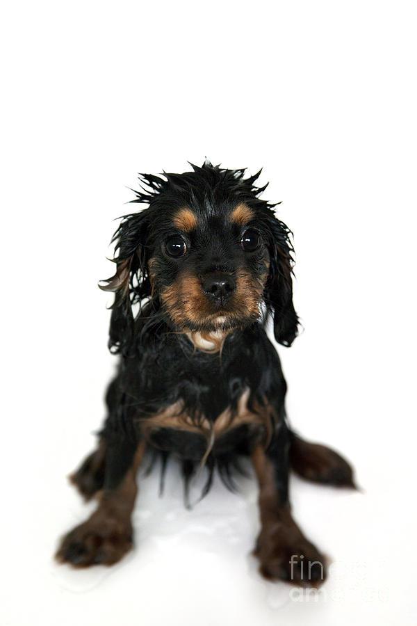 Adorable Photograph - Puppy Bathtime by Jane Rix