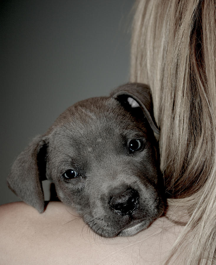 Puppy Photograph - Puppy Love by Janet Smith