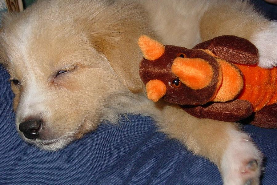 Puppy Digital Art - Puppy Love by Wide Awake Arts