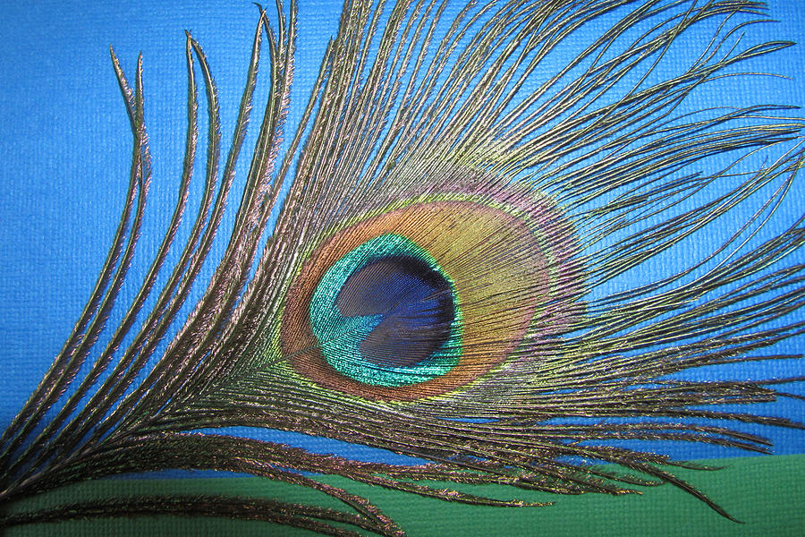 Pavo Photograph - Purdy As A Peacock by Kathy Clark