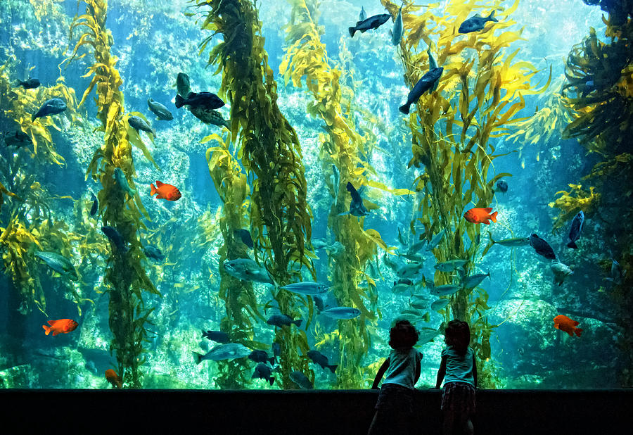 Aquarium Photograph - Pure Childhood Fun  by Donna Pagakis