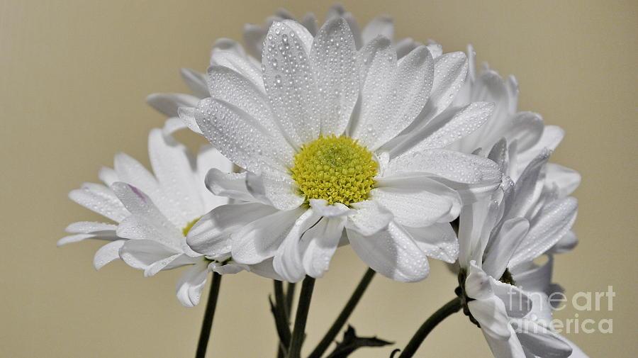 White Photograph - Pure by Nancie DeMellia