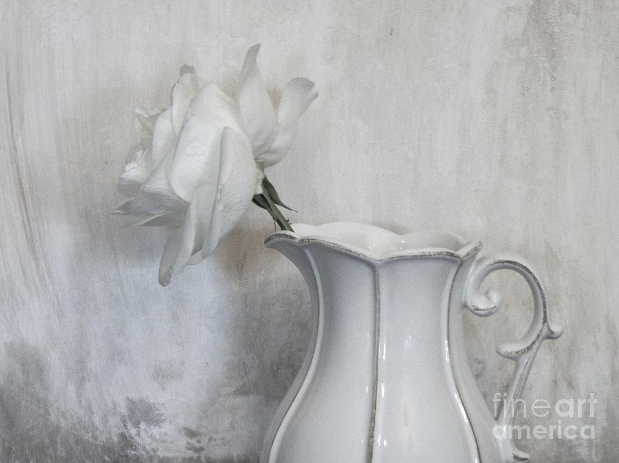 Photo Photograph - Pure White by Marsha Heiken