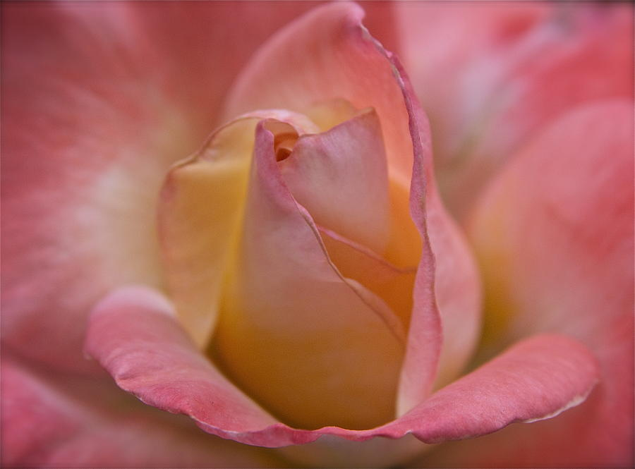 Flowers Photograph - Purity by Annie Flatley