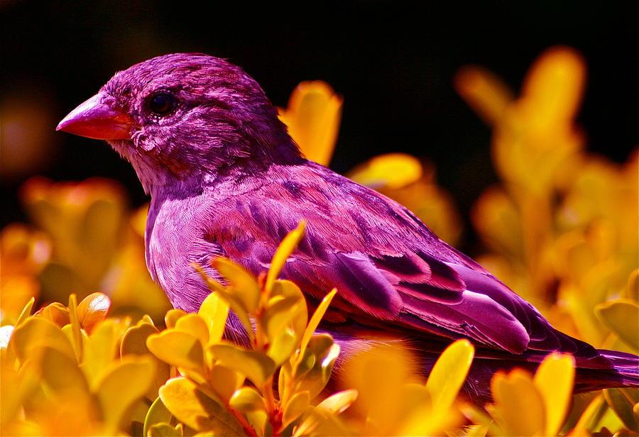 Черно-белые фото птиц с фиолетовым элементом