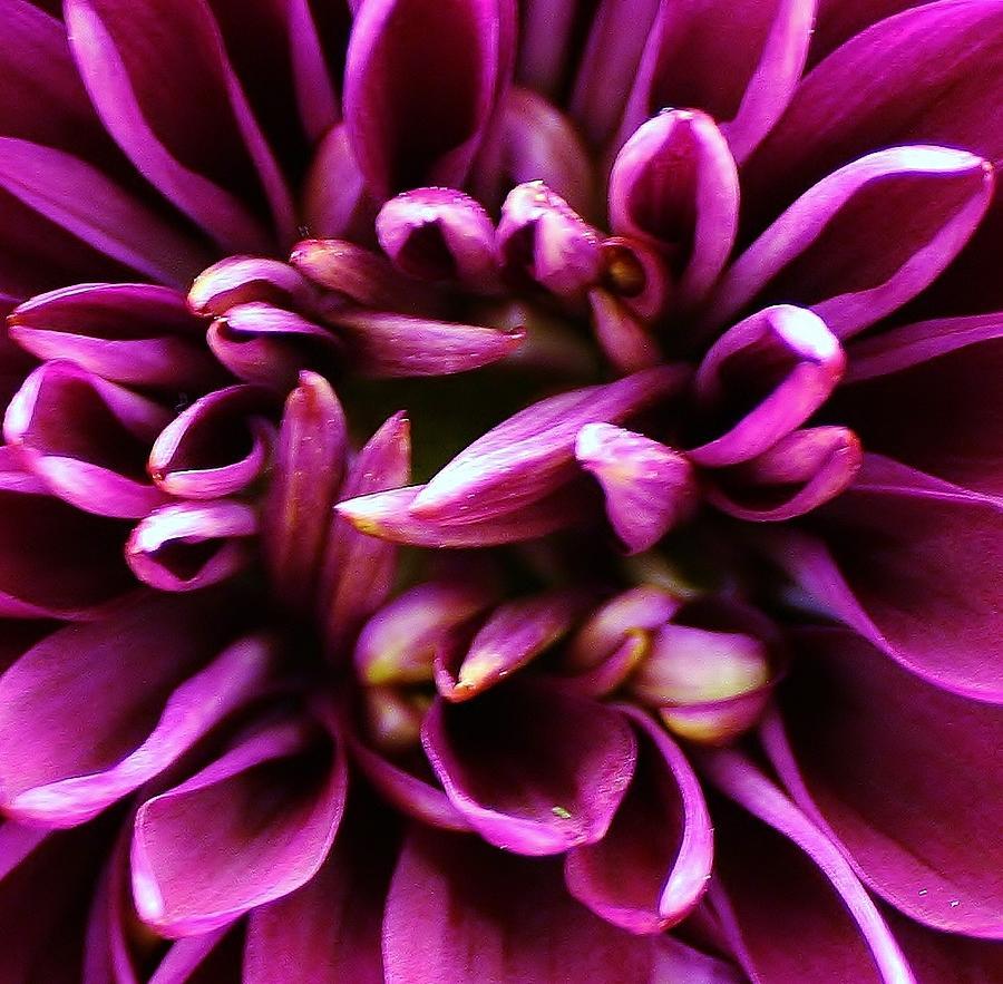 Flora Photograph - Purple Explosion by Bruce Bley