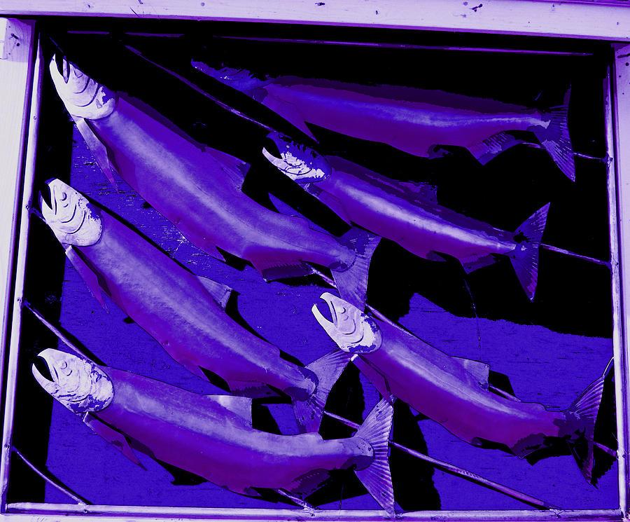 Six Salmon That Are Purple Photograph - Purple Fish Art by Kym Backland