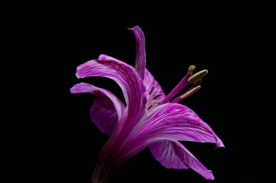 Purple Flower Photograph by Ron Smith