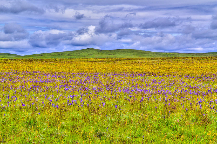 Eastern Oregon Photograph - Purple Flowers On The Prairie by Jen TenBarge