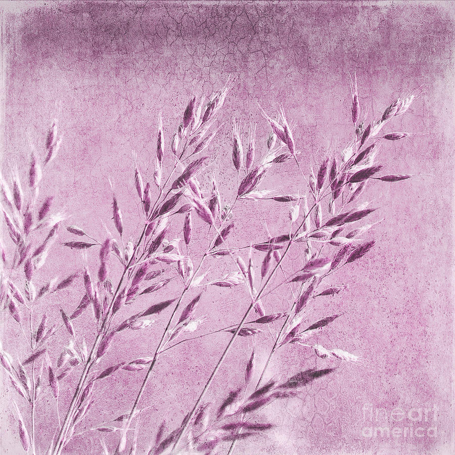 Abstract Photograph - Purple Gras by Angela Doelling AD DESIGN Photo and PhotoArt