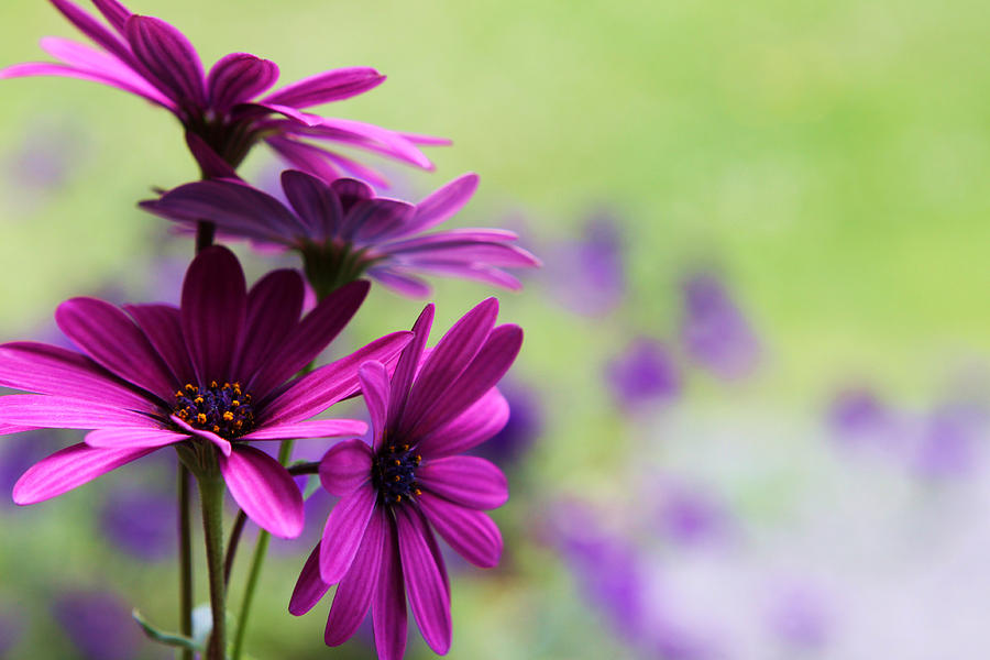 Nature Photograph - Purple Love by Penny Haviland