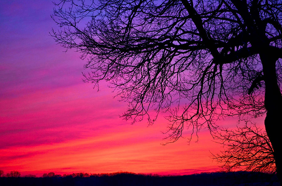 Purple Photograph - Purple Majesty by Brenda Becker