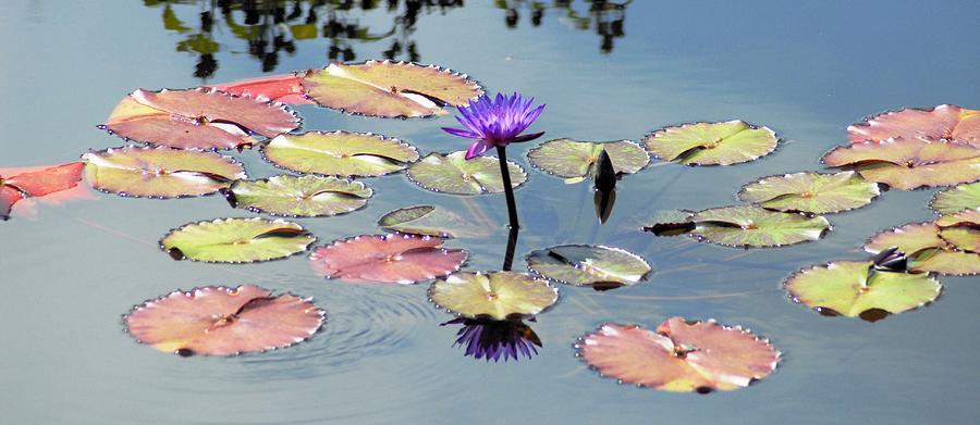 Purple Photograph - Purple Mirror by