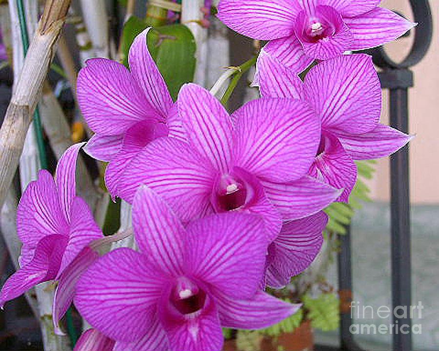 Flowers Photograph - Purple Orchids by Merton Allen