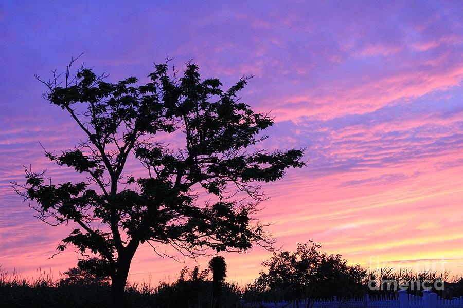 Nature Photograph - Purple Passion Horizontal by Scenesational Photos
