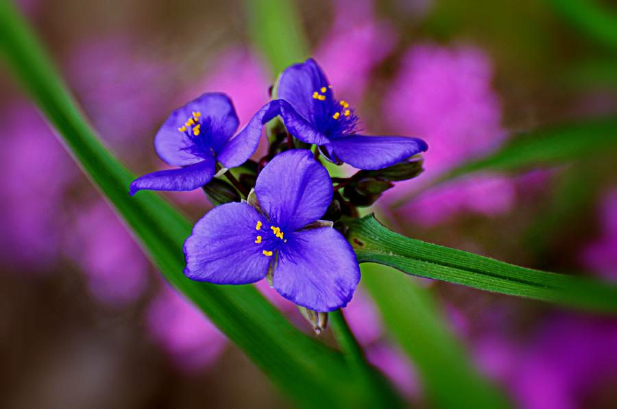 Purple Photograph - Purple Passion by Marty Koch