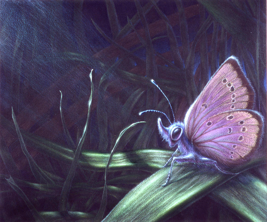 Butterfly Painting - Purple by Shawn Kawa