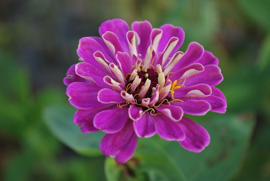 Purple Photograph - Purple Smash by Michelle Cruz