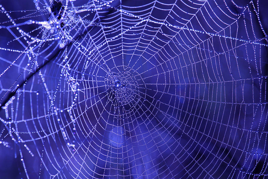Spider Prints Photograph - Purple Spiderweb by Paul Marto