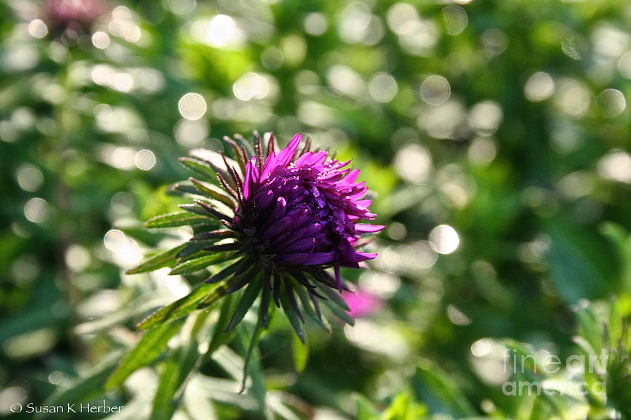 Outdoors Photograph - Purple  by Susan Herber