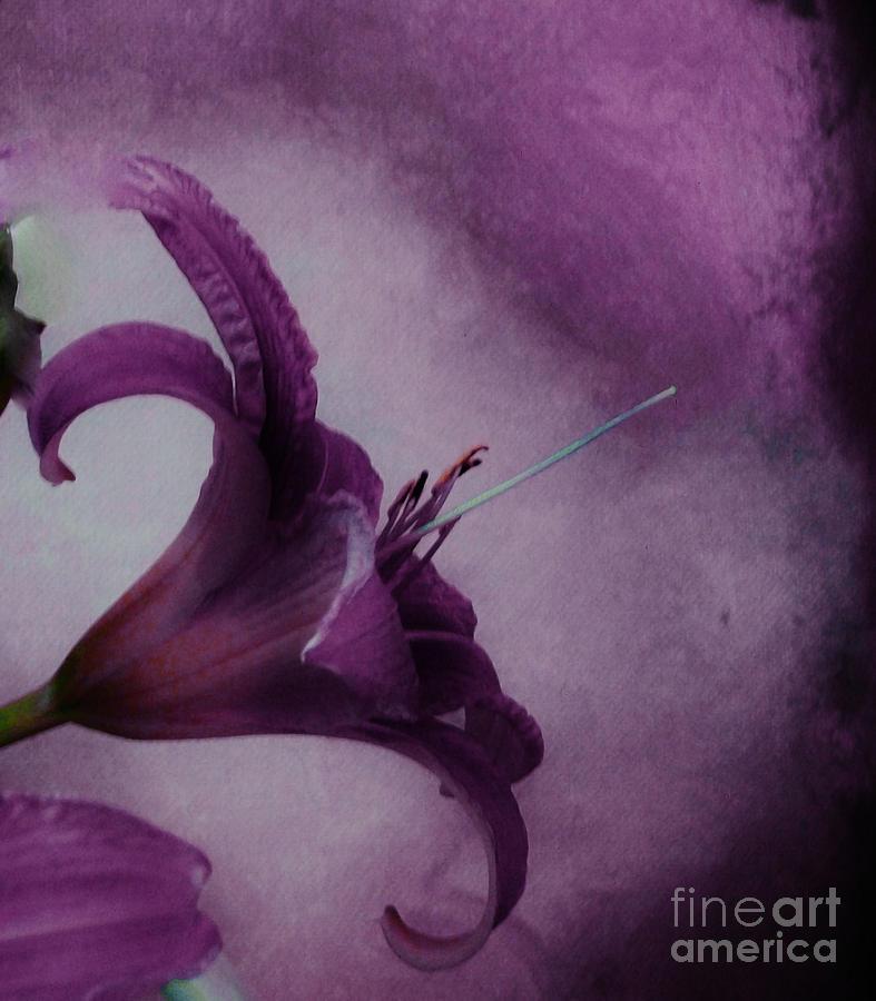 Photo Photograph - Purple Tiger by Marsha Heiken