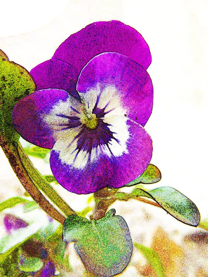 Viola Digital Art - Purple Viola by Robin Hewitt