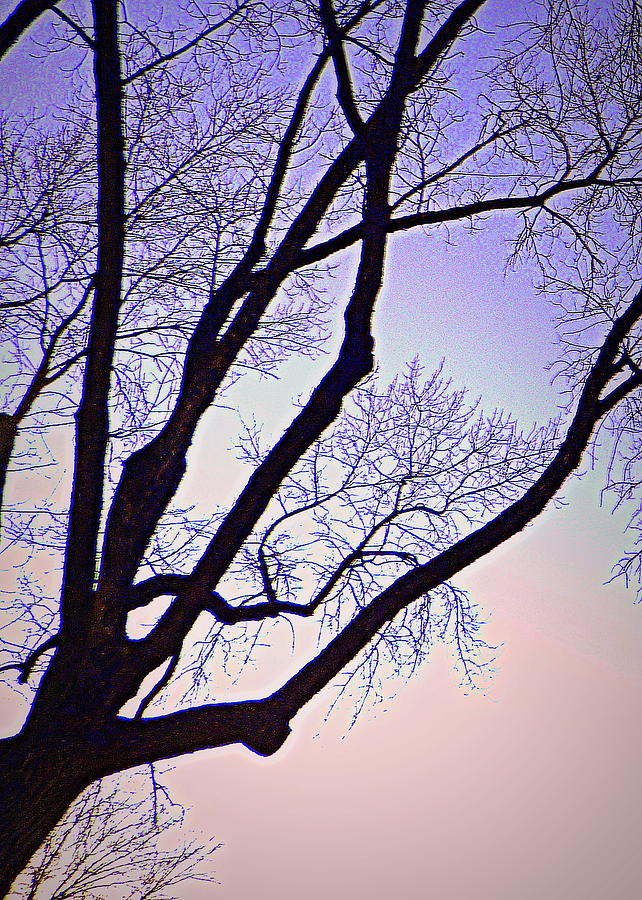 Trees Photograph - Purpler Branch by Dan Stone