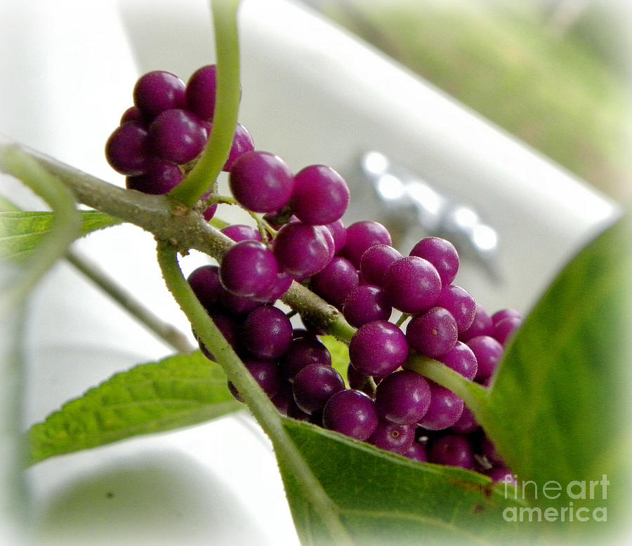Bathtub Photograph - Purples And Greens by Tisha  Clinkenbeard