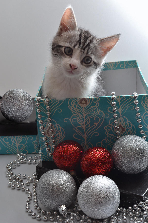 Cat Photograph - Purr-fect Christmas. by Terence Davis
