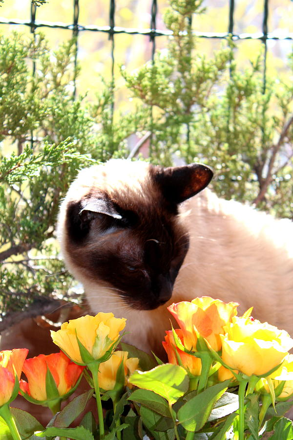 Cats Photograph - Purrfect Scent by Sonja Bonitto